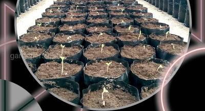 Основні способи протруювання насіння