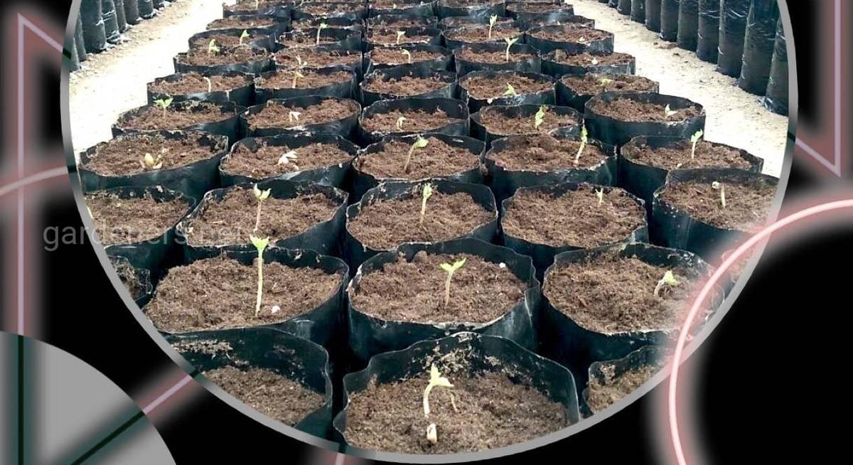 Передпосівна обробка насіння: як отримати якісну розсаду