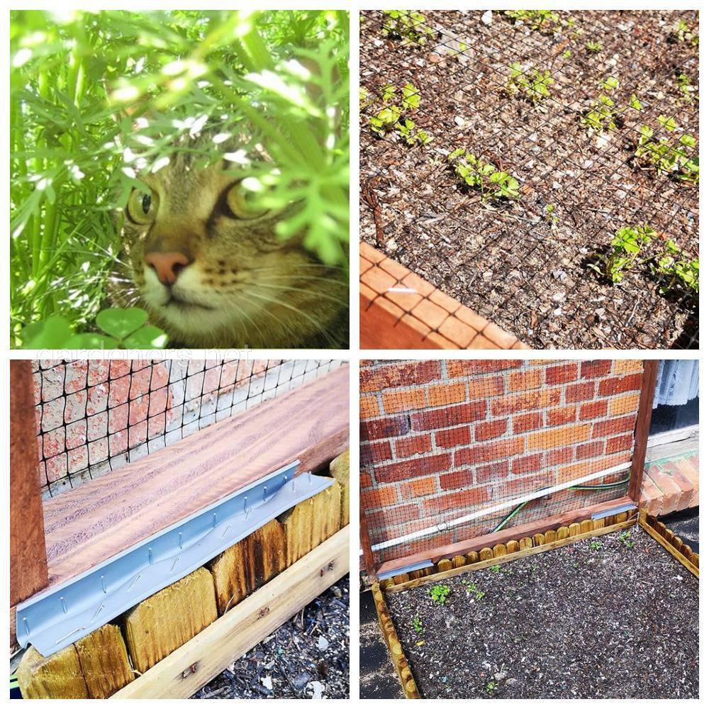 Защита от кошек на дачном участке