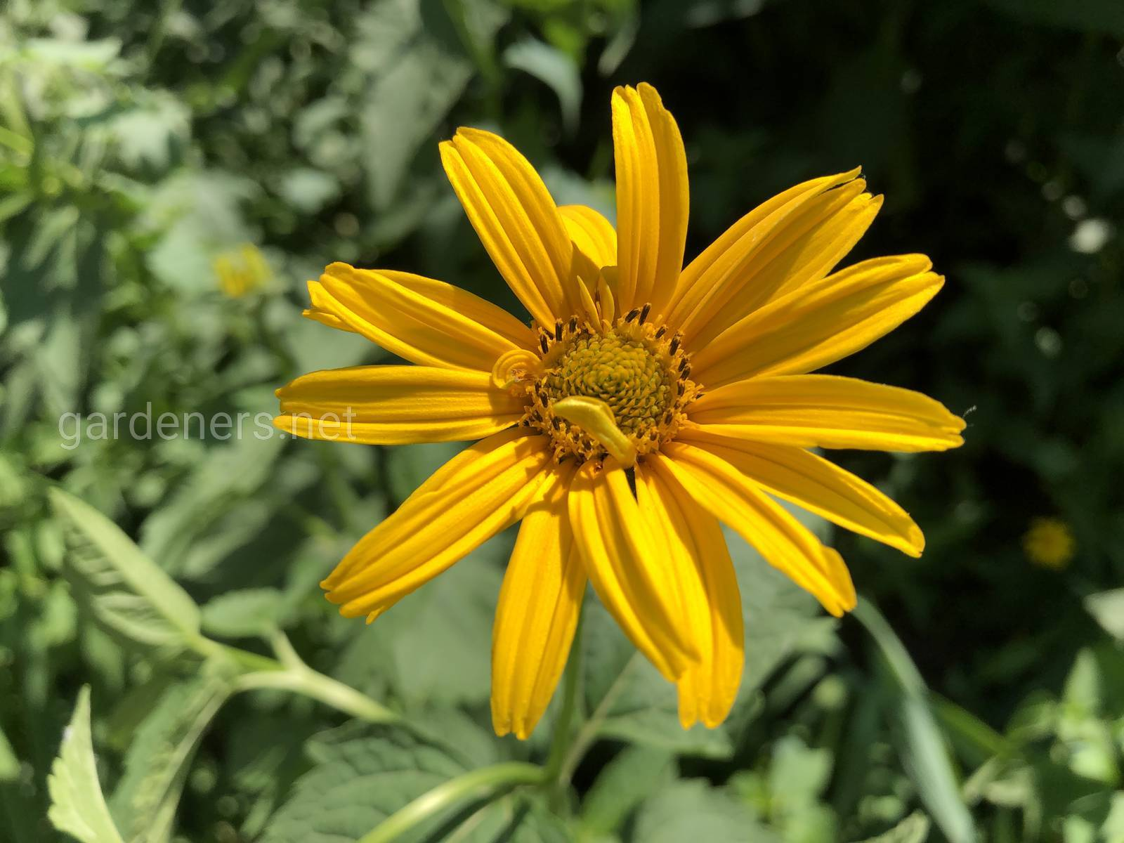 Желтая красота