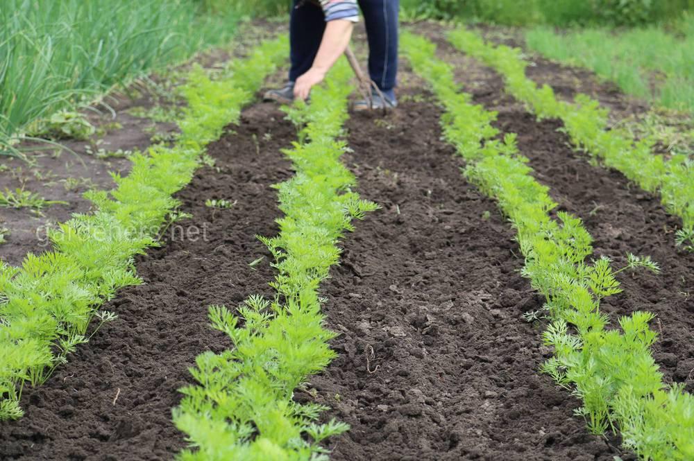 сприятливі дні для посіву овочевих культур в серпні