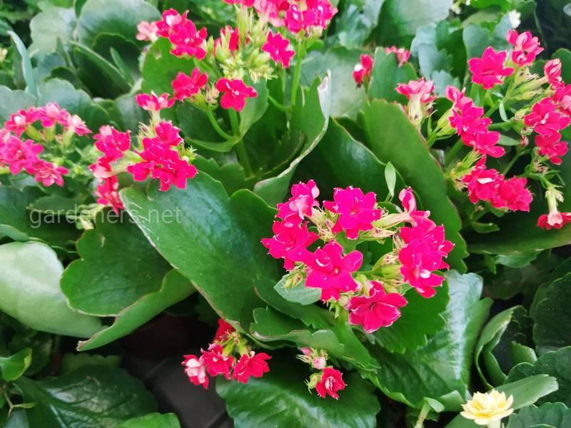 Какие комнатные растения неприхотливы в выращивании?