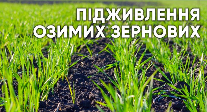 Підживлення озимих зернових