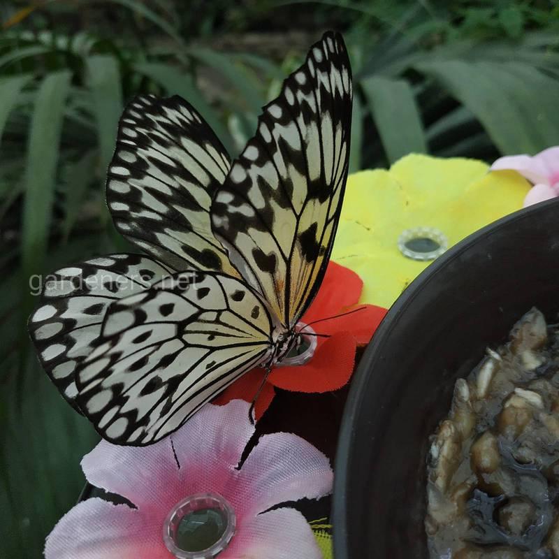 Як зробити сад метеликів?