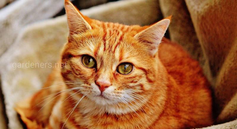 Влияние знака зодиака на характер кошки (I часть)