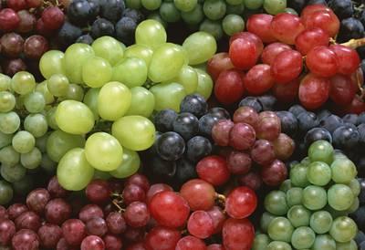vinograd-raznotsvetnyiy.jpg
