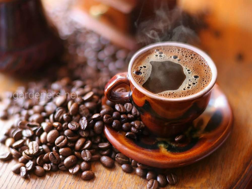 Когда открыли кофеин