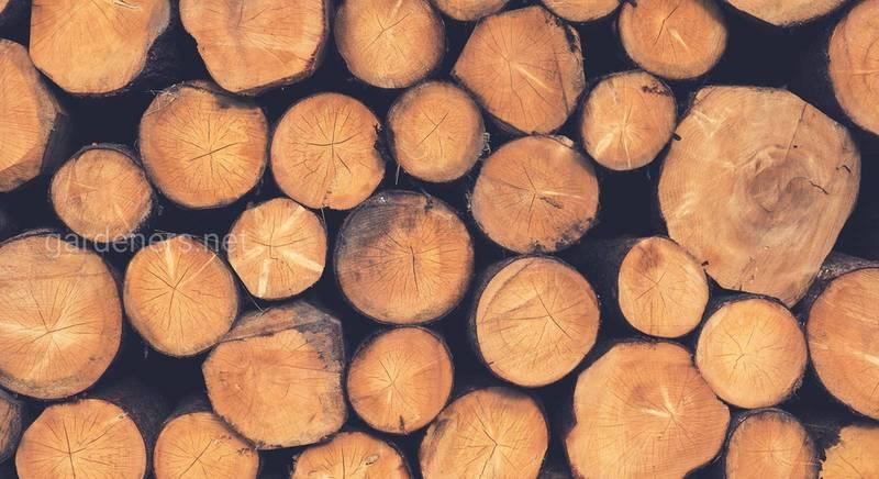 Як правильно вибрати дрова для каміна або печі