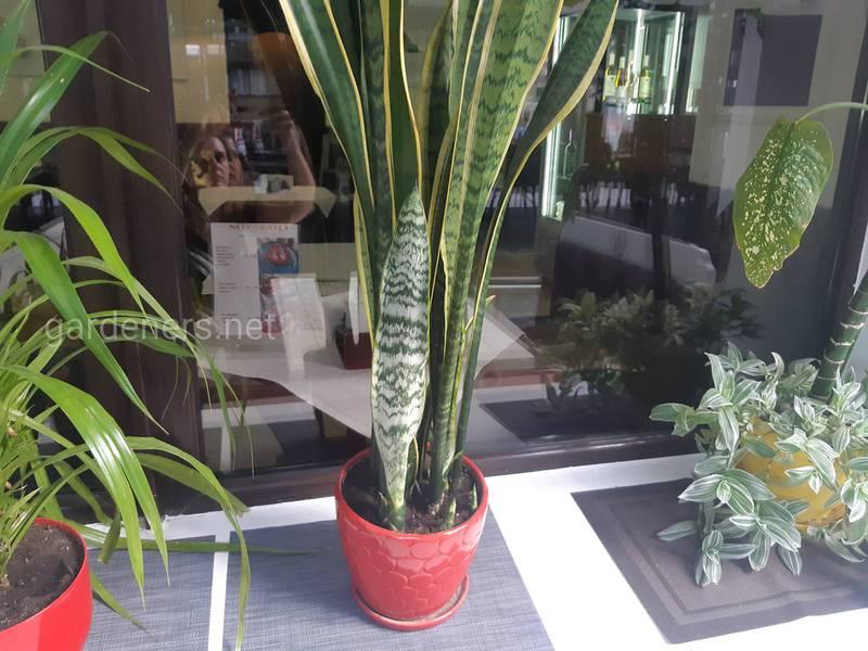 Як правильно вибрати місце для кімнатних рослин?