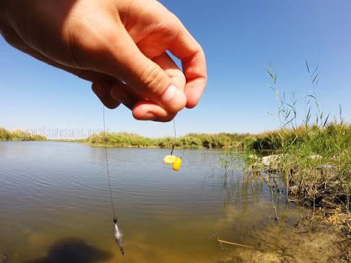 Використання кукурудзяної крупи в риболовлі