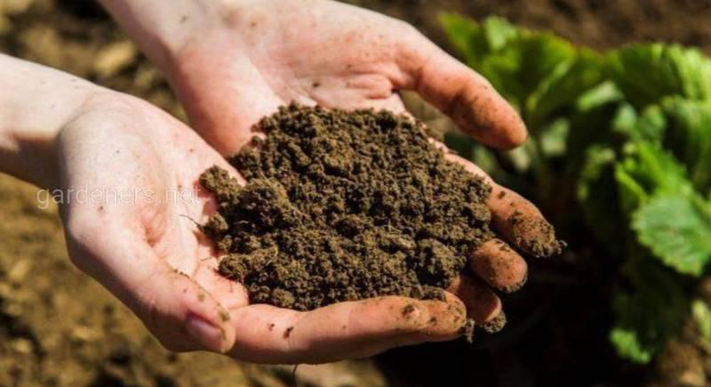 известковая почва.jpg
