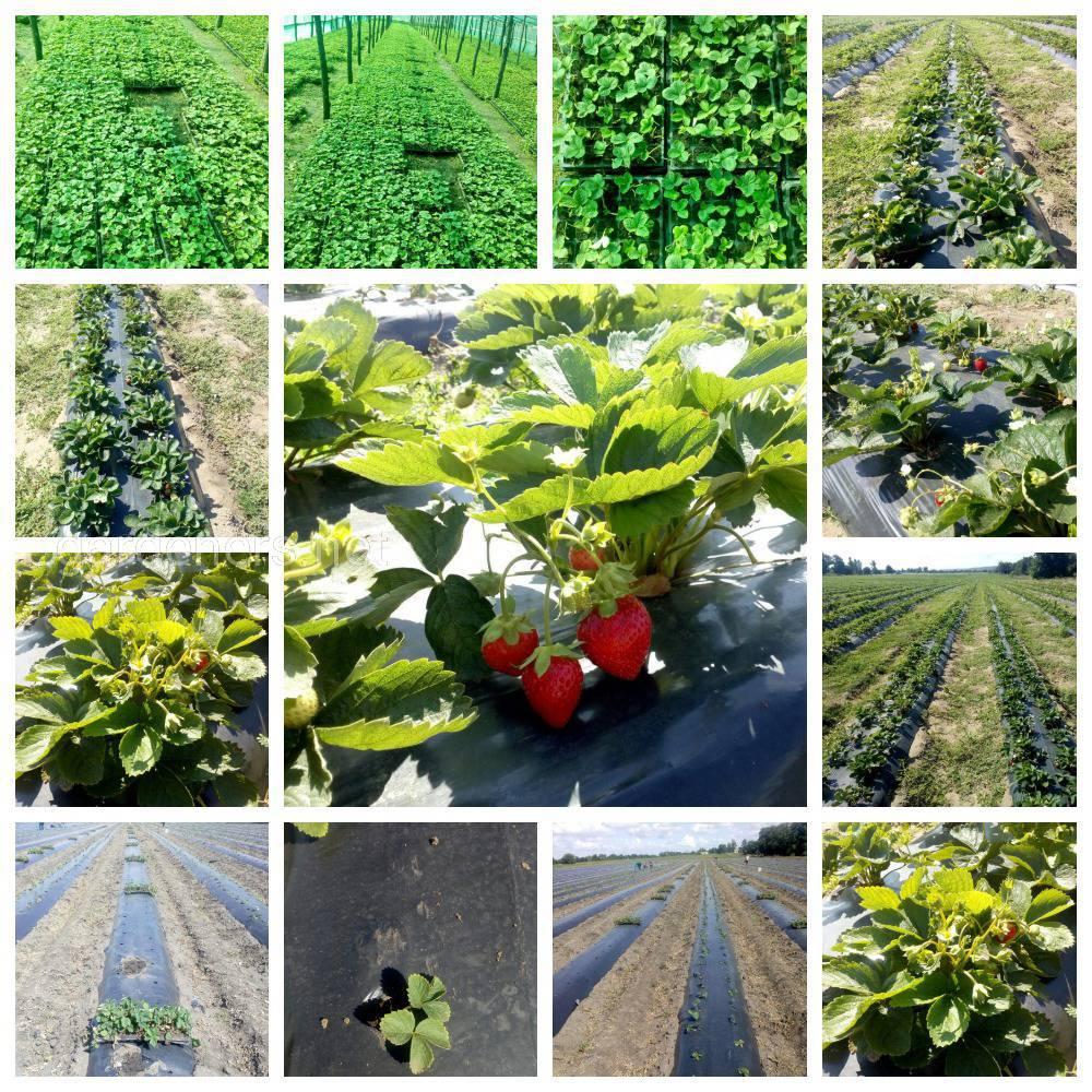 плодово-ягідної продукції з біотехнологією ТМ «Жива Хлорела»