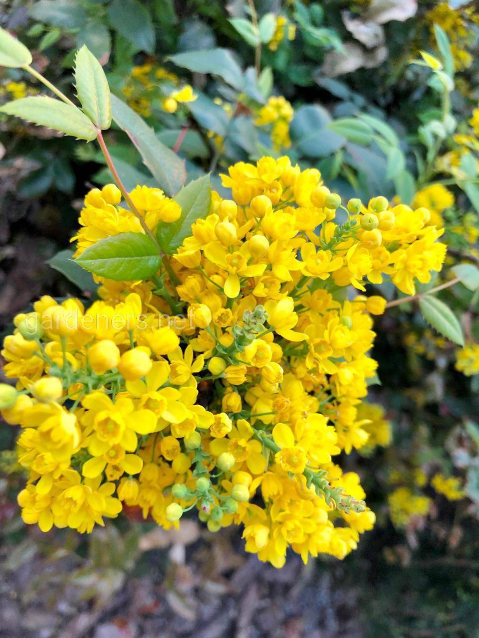 Жёлтая красота