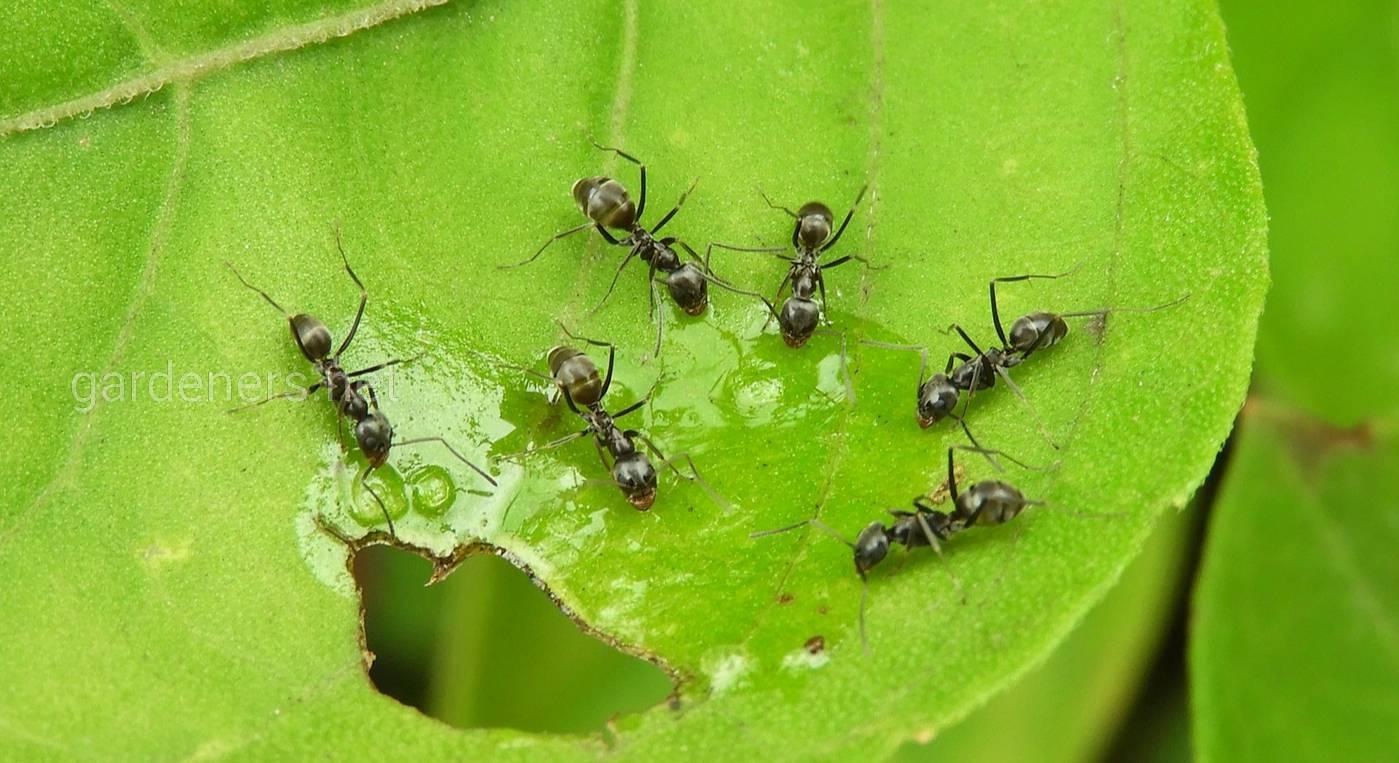 муравьи в саду картинки дня первоклассника для