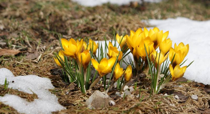 весна в саду.jpg