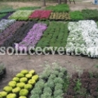 solncecvet.com.ua
