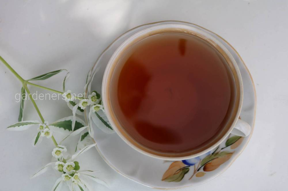 Домашний ферментированный чай