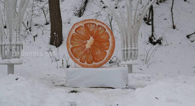 Первый в Украине Цитрусовый Новогодний фестиваль.JPG