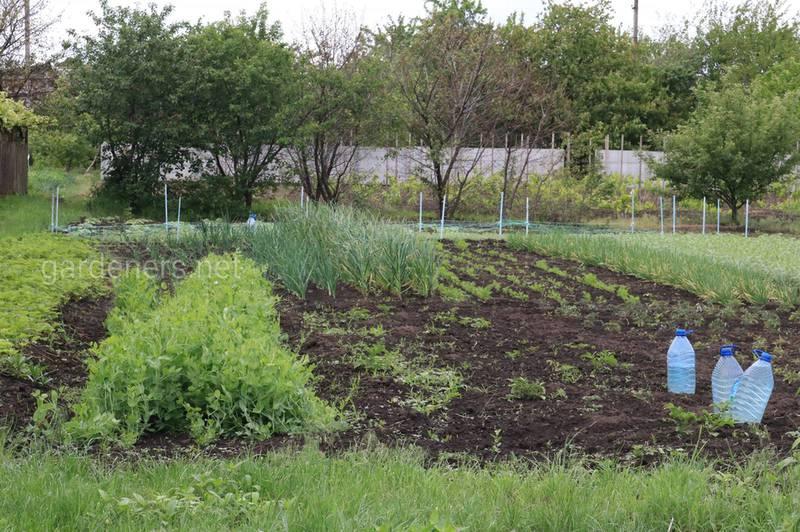 Как проверить плодородие почвы в вашем саду? Советы начинающим садоводам