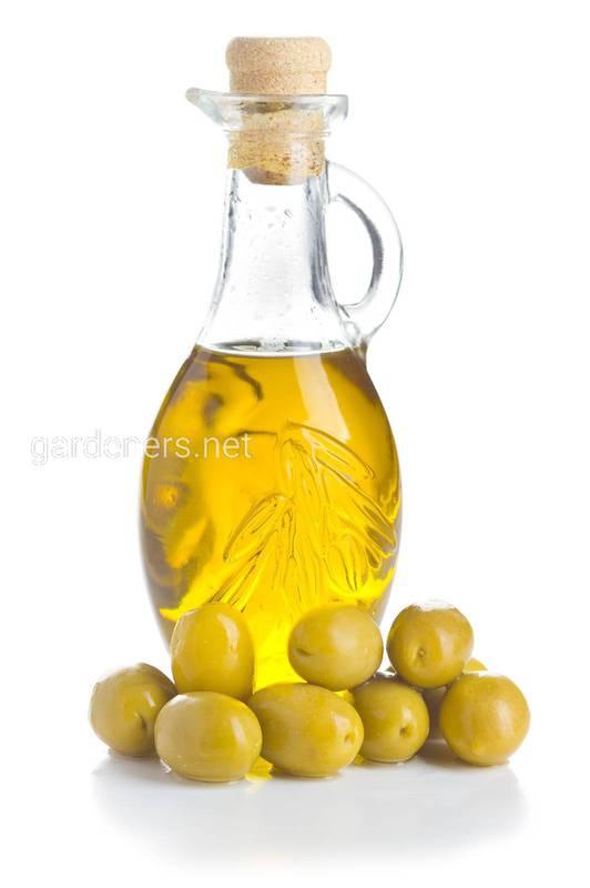 Оливковое масло в рационе