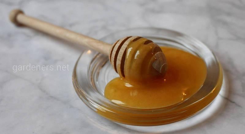 Буркуновий мед: властивості, користь, особливості