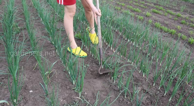 Какие правила необходимо соблюдать при работе на огороде в жару