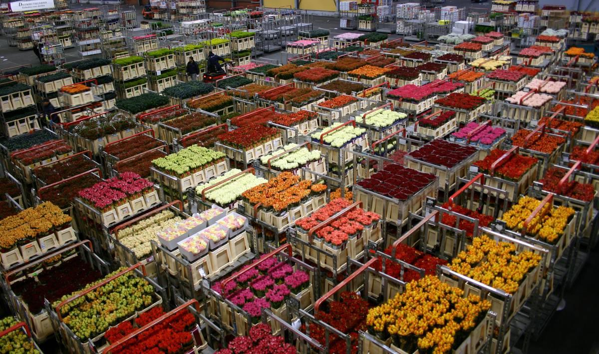 цветочный аукцион в Аалсмеере