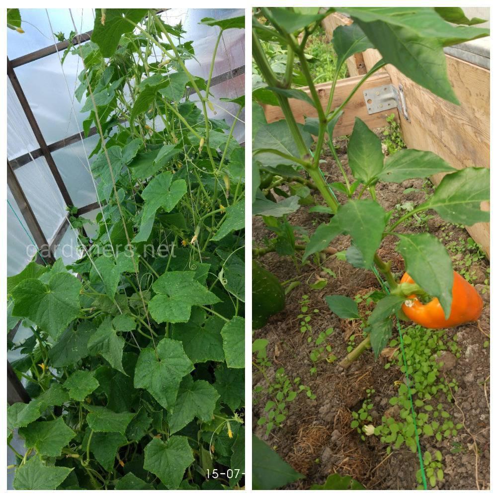 Теория и практика садовода на участке с нуля