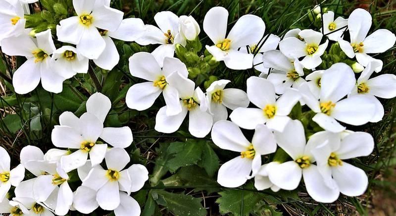 весенние цветы.jpg