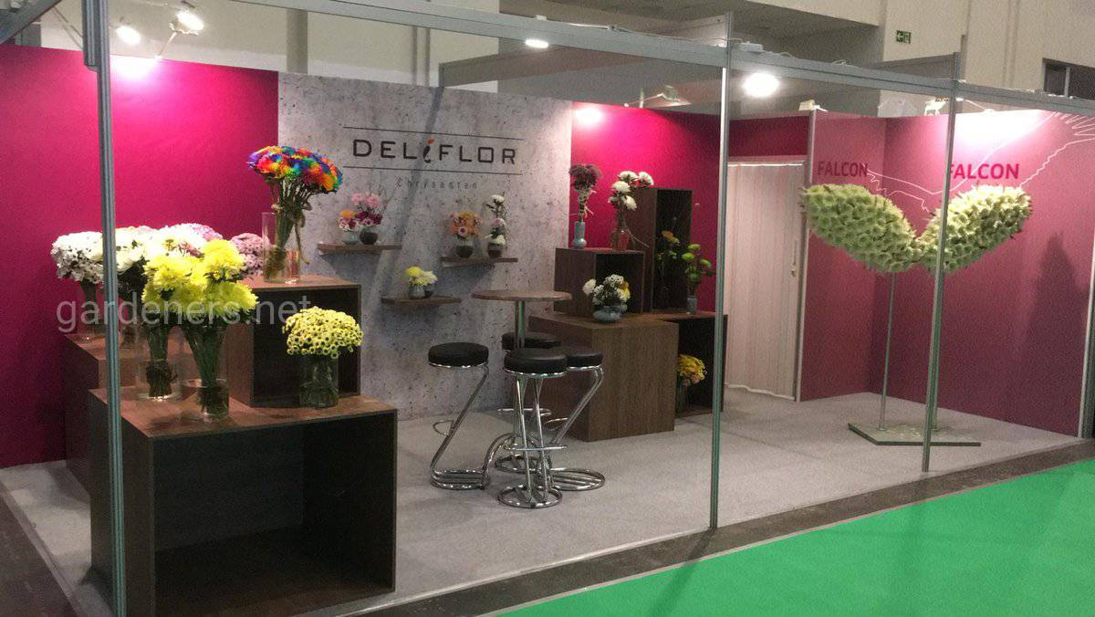 продукции «Deliflor» хризантемы