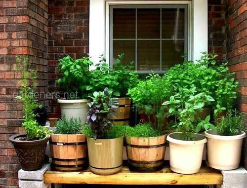 Озеленення для краси і столу