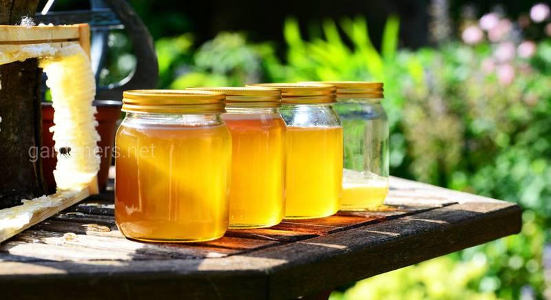 Медовые рецепты для укрепления здоровья