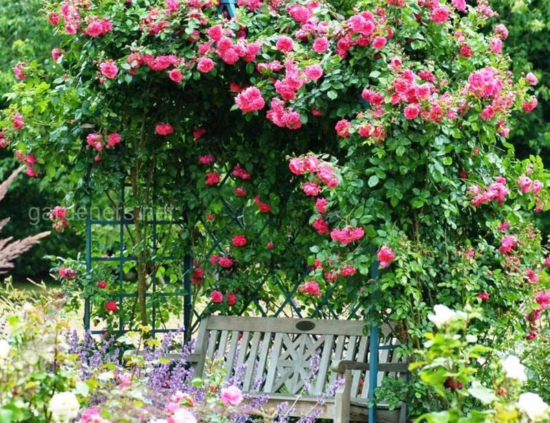 Август  - время для обрезки кустарников и роз!