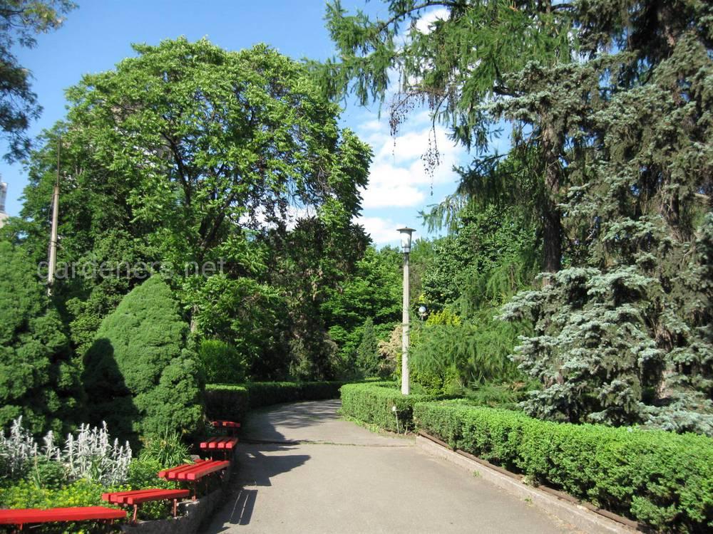 Центральный ботанический сад имени А.В.Фомина