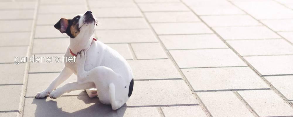 Паразитарні хвороби котів та собак