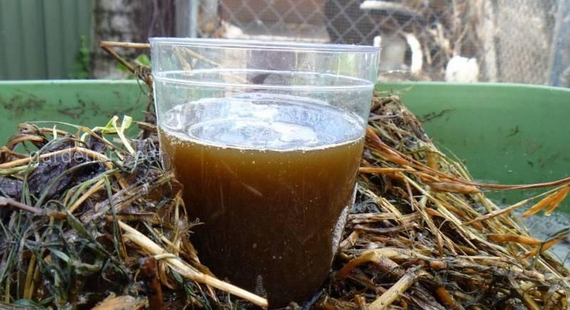 Компостный чай, или как повысить плодородие почвы?