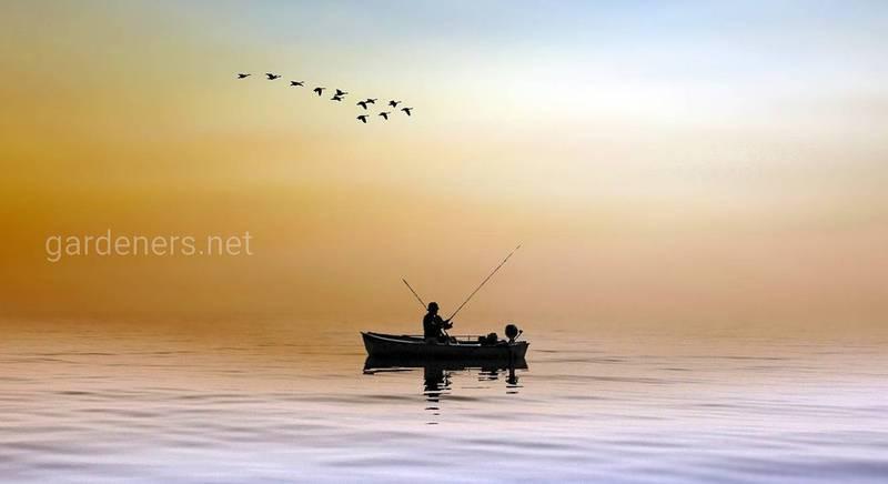 Прикормка для рыбалки: какая лучше