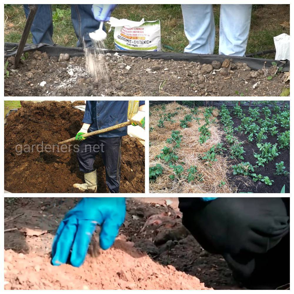 Как улучшить суглинистую почву