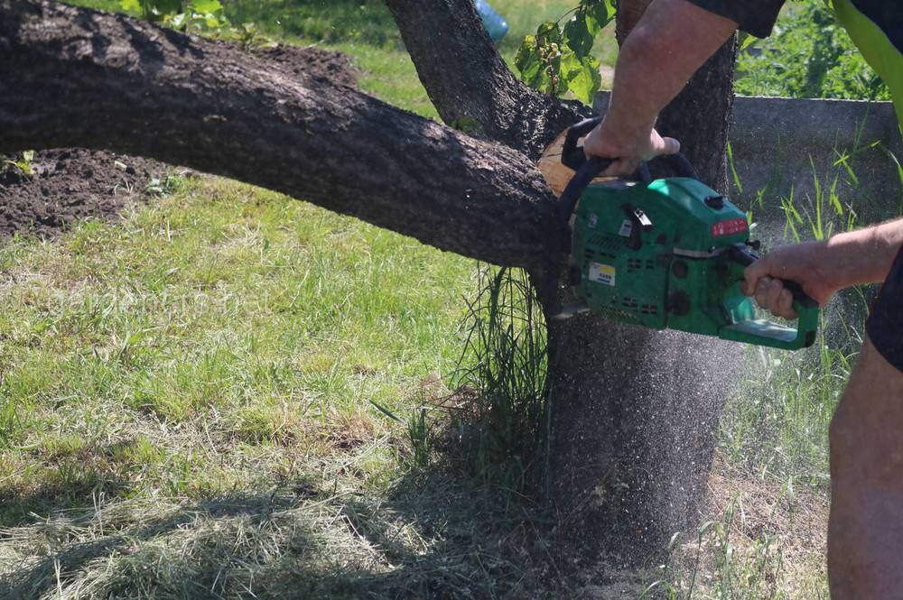 Важливі моменти при обрізанні дерев