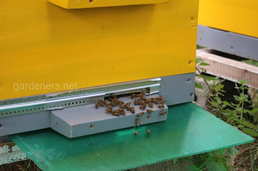Правила перевозки ульев с пчелами