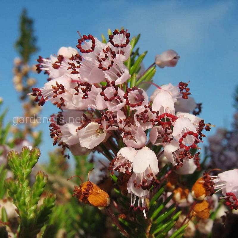 Які осінні квіти можуть тішити вас своїми яскравими фарбами в садку?