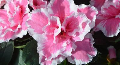 flowers-2817445_1920.jpg