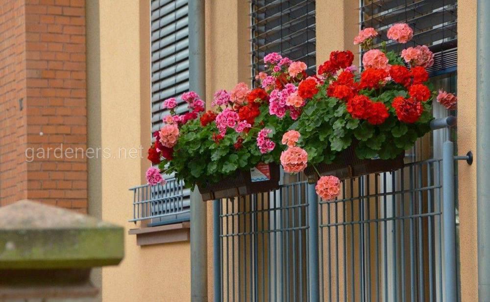 Балкон цветущих цветов