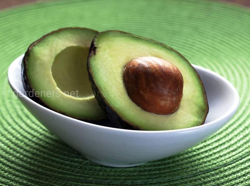 Авокадо как первый прикорм