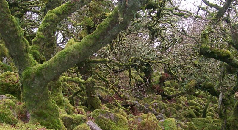 Вудман Вуст: сказочное место с мохнатыми деревьями