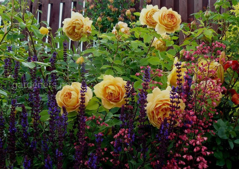 компаньоны для роз