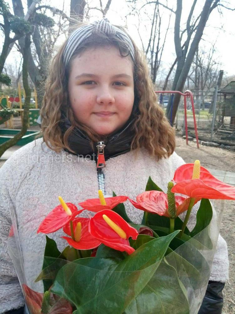 Антуріум — екзотична рослина в домашніх умовах