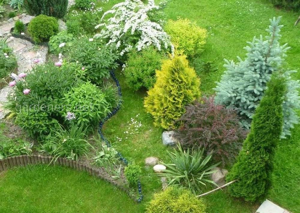 Хвойные растения и газонная трава