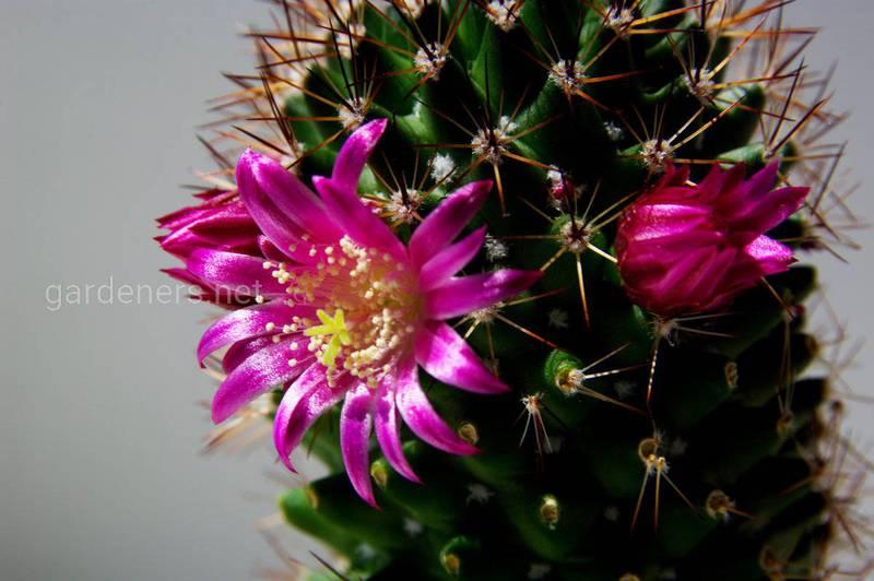 Как правильно ухаживать за кактусами посезонно?