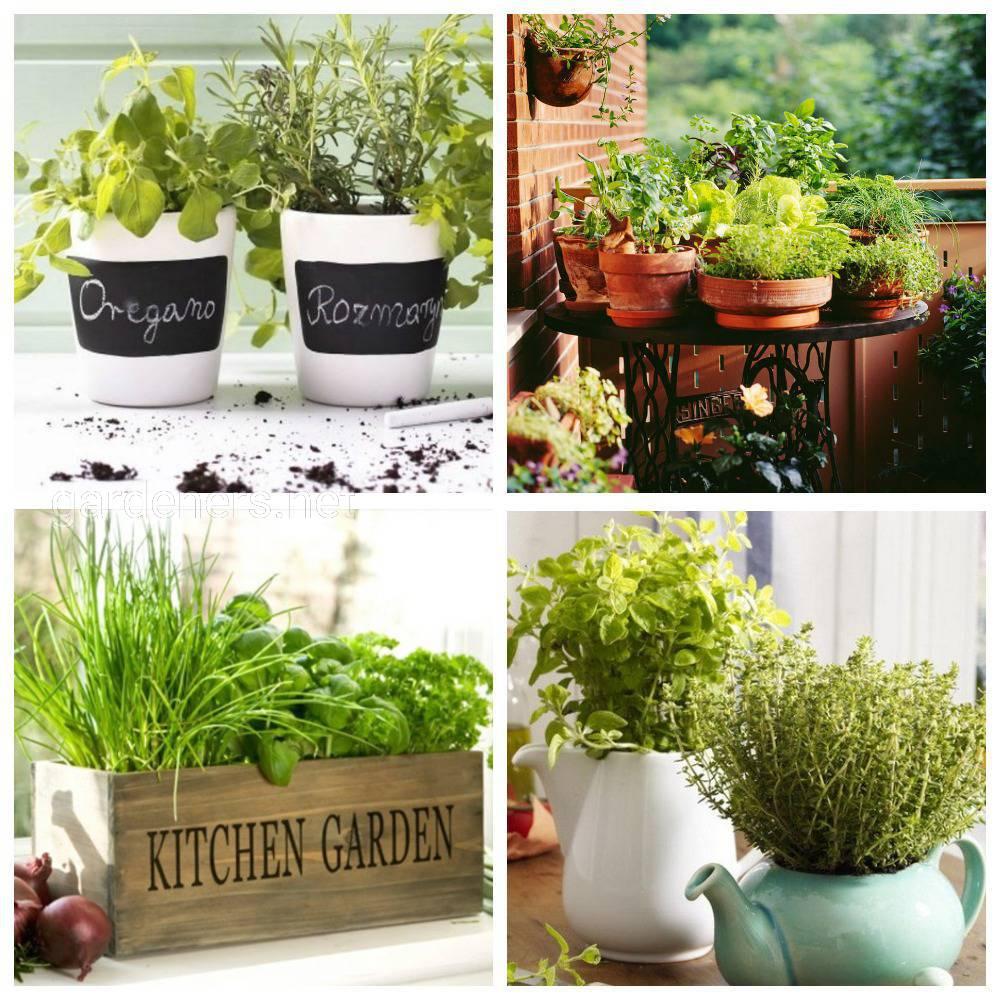 Создайте оригинальный ароматный цветник у себя дома